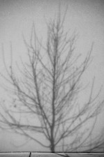 Undertown: Tree on a wall